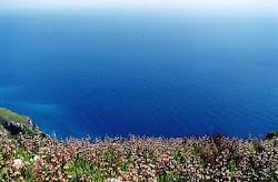 Meditflora: Portale fiori e piante in Costiera