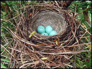 eggs in nest onequartermama.ca