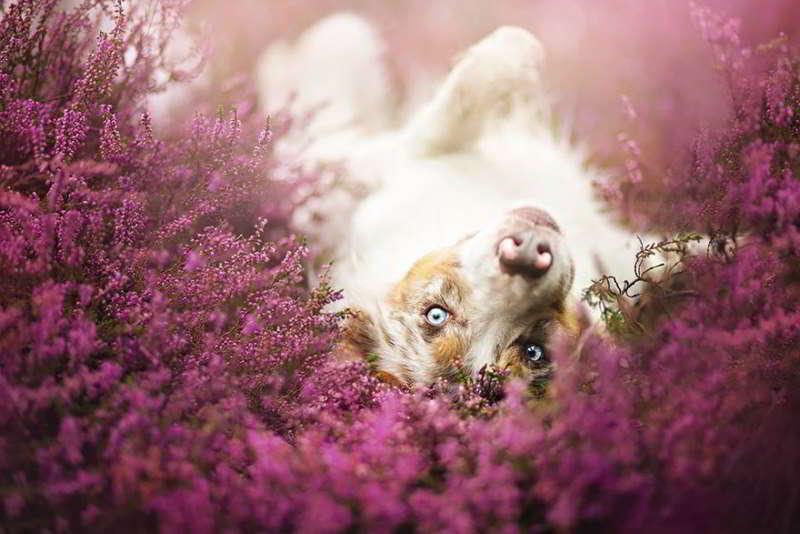 dog-photography-alicja-zmyslowska-15