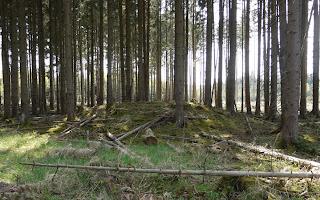 Bild 4: Grabhügel im Forstenrieder Park