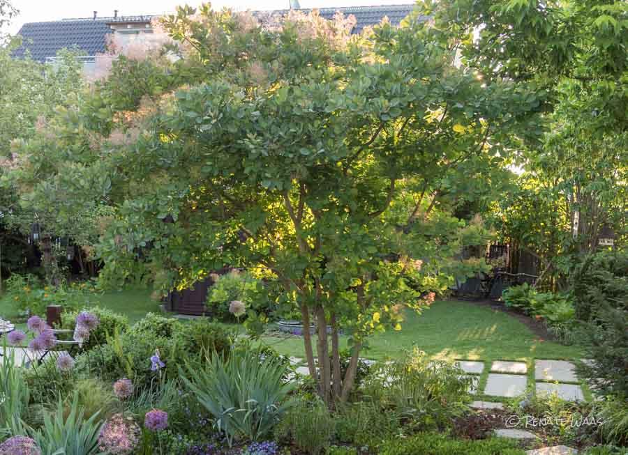 Sichtschutz Holz Querlattung ~ Dieser Perückenstrauch ist nur gepflanzt worden, um im Sommer den
