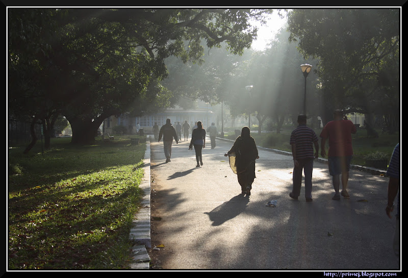 Misty morning, Lalbagh