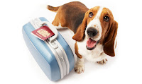dog 2 Top Tips for Traveling With Pets