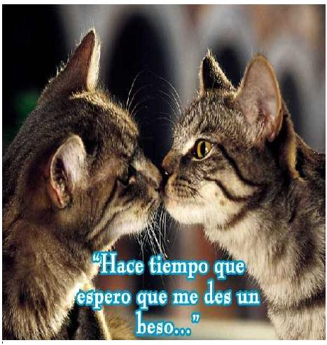 imágenes de besos tiernos de gatos