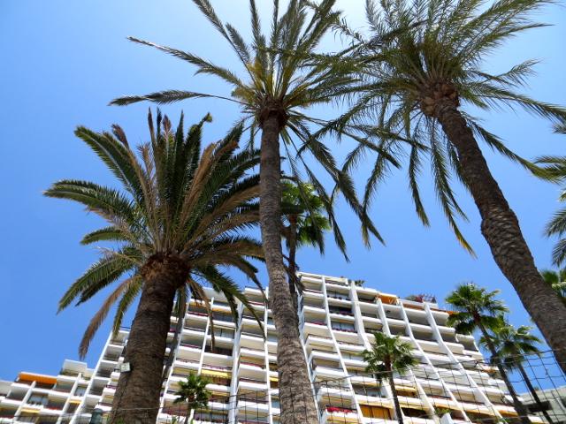palm trees arguineguin gran canaria