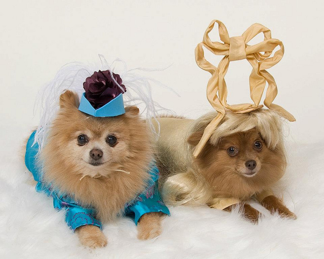 Two dogs dressed up as princesses