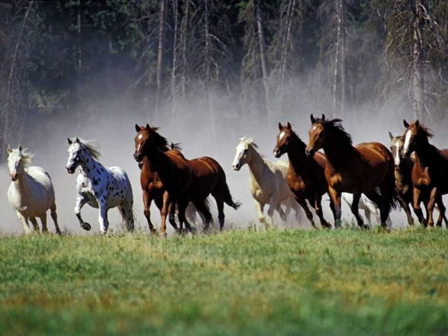 Running horses wallpaper hd hd wallpapers collection view original size voltagebd Choice Image