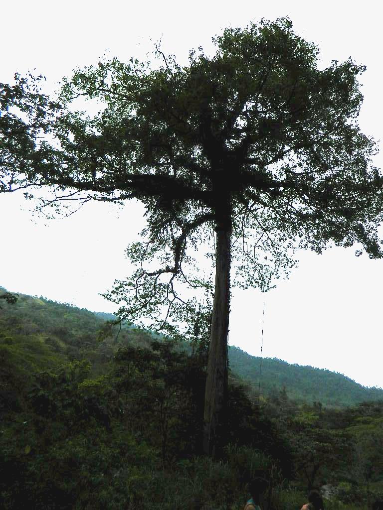 Imagenes Flores Tropicales Costa Rica - Las orquideas silvestres en Panama