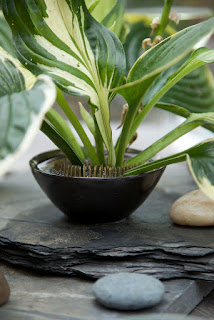 Centerpiece, hosta