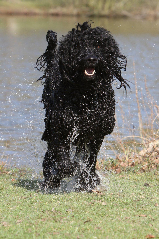 Write A Essay About My Pet Dog: Descriptive Essay About a Dog, Health ...