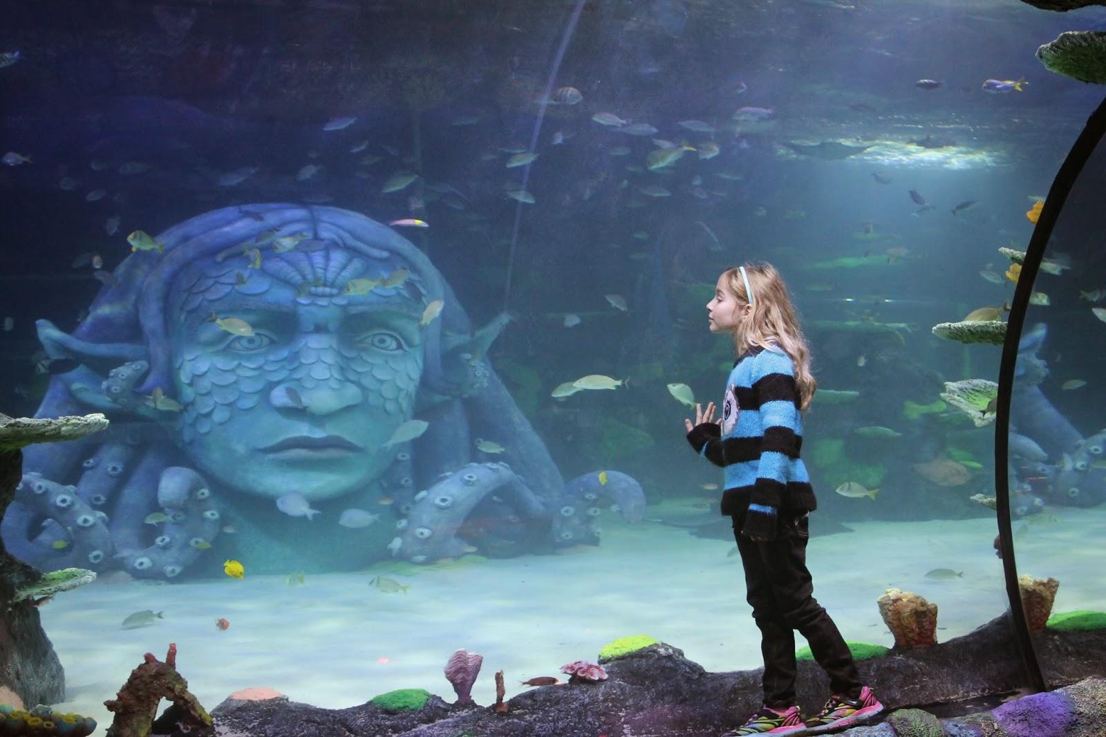 Ann Arbor Mom Blog Sea Life Michigan Is Open