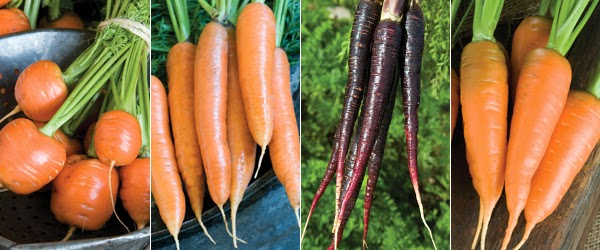 http://www.johnnyseeds.com/c-18-carrots.aspx?source=growingideas_carrots022014