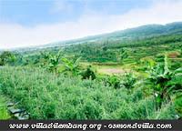 Perkebunan sekitar villa
