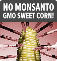 grocery store ceos: refuse monsanto's gmo sweet corn!