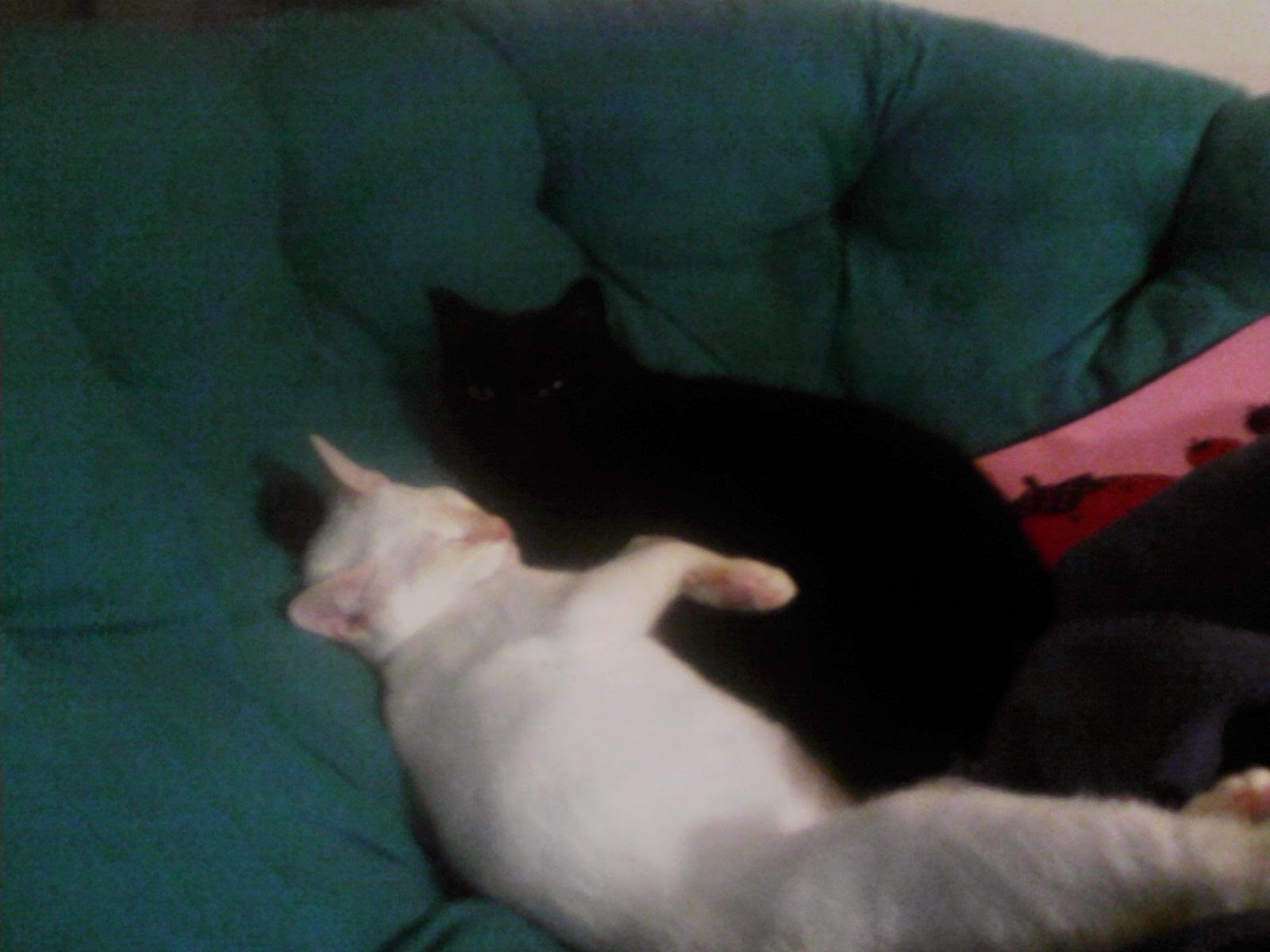image is a white cat & a black cat snuggling in a green papisan chair