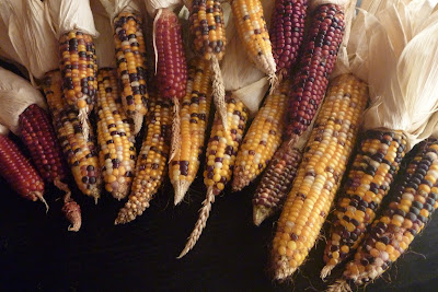 permaculture glass bead corn