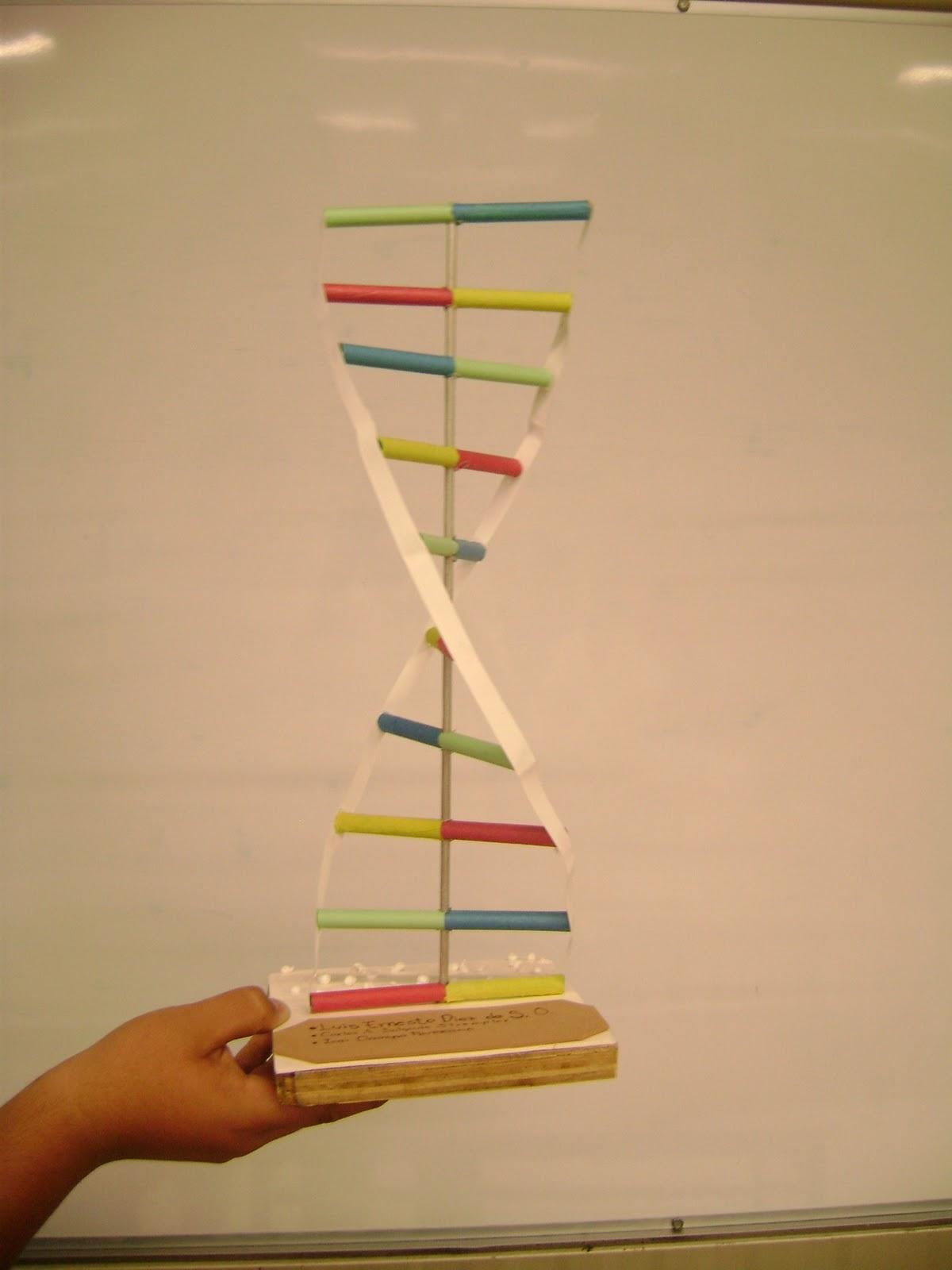 como hacer un modelo de adn en 3d original yahoo