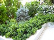 κηπος στον βυρωνα (1 χρονο μετα)