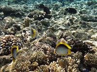 underwater-camera-3