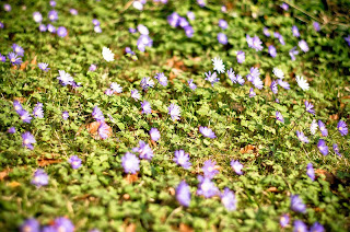 Jardin des plantes - Caen (Photo Gaëtan Zarforoushan, Licence Creative Commons BY)