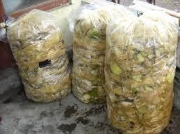 cara mudah membuat pakan fermentasi ternak domba