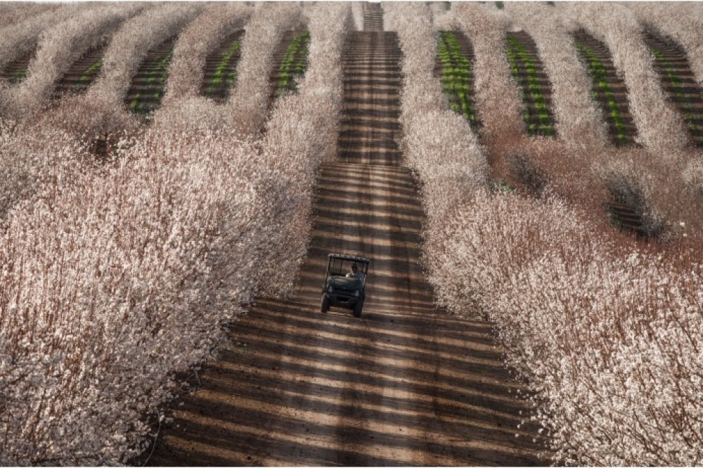 The 100 best photographs ever taken without photoshop - Tractor among almond fields, California