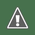 Logo equipo Fénix