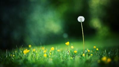 Harmonica Tabs - Tôi thấy hoa vàng trên cỏ xanh - Ái Phương
