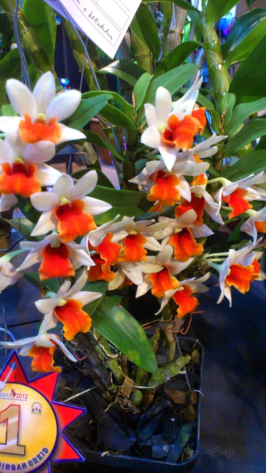 jenis bunga orkid