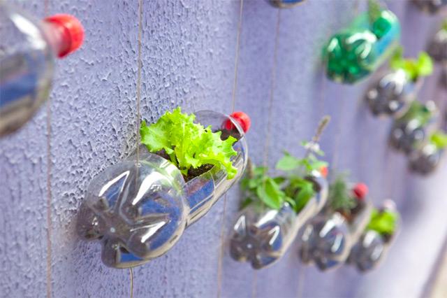 jardim vertical urbano:Recycle Plastic Bottle for Garden