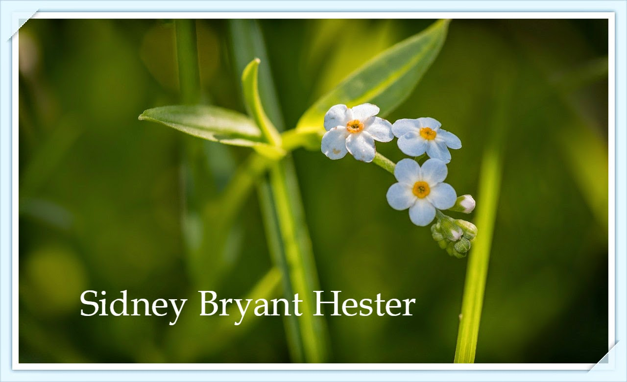 Sidney Bryant Hester --How Did I Get Here? My Amazing Genealogy Journey