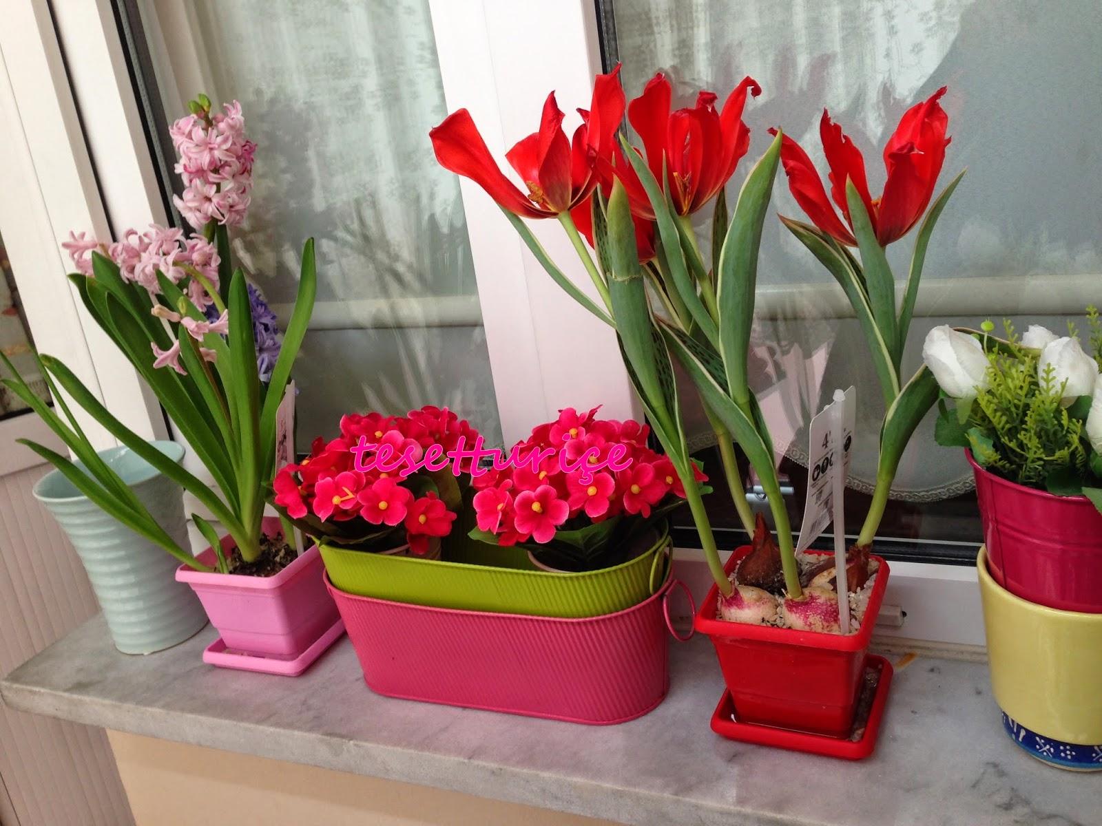 balkon pencere önü çiçeklerim