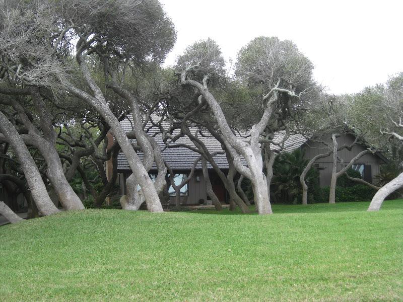 Kiwi in Texas: Spring break trip - Corpus Christi