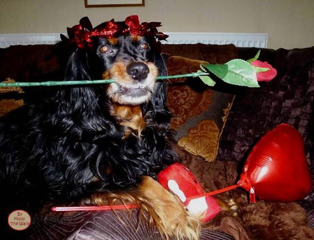 Molly The Wally Says Be My Valentine!