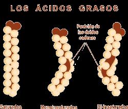 cristales de acido urico en embarazadas que comer con acido urico y colesterol tratamiento fisico para la gota