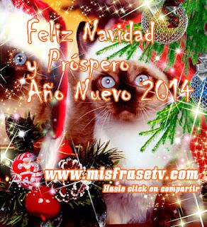 Frases De Año Nuevo: Feliz Navidad Y Próspero Año Nuevo 2014 Miaaau