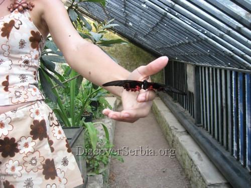 Tropski leptiri