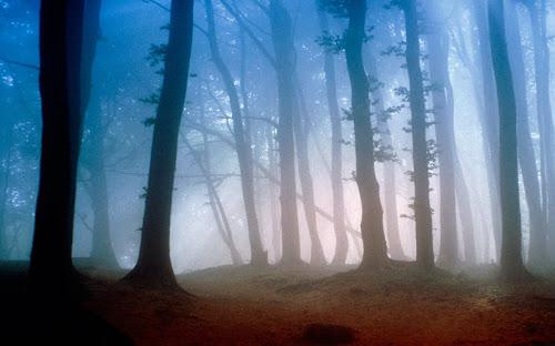 Gambar-Gambar Hutan Terkeren