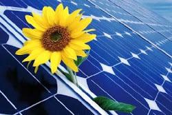 a Flower in Solar
