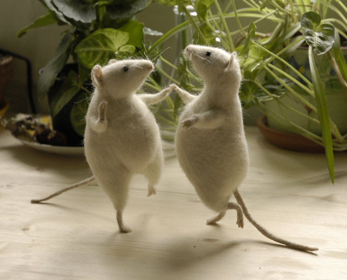dancing animals funny pics   funny pictures funny photos