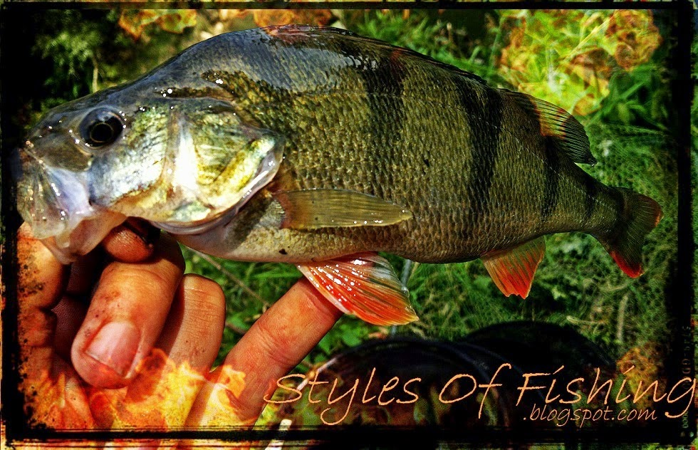 www.styles-of-fishing.blogspot.com