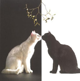 Black cat and white cat under mistletoe