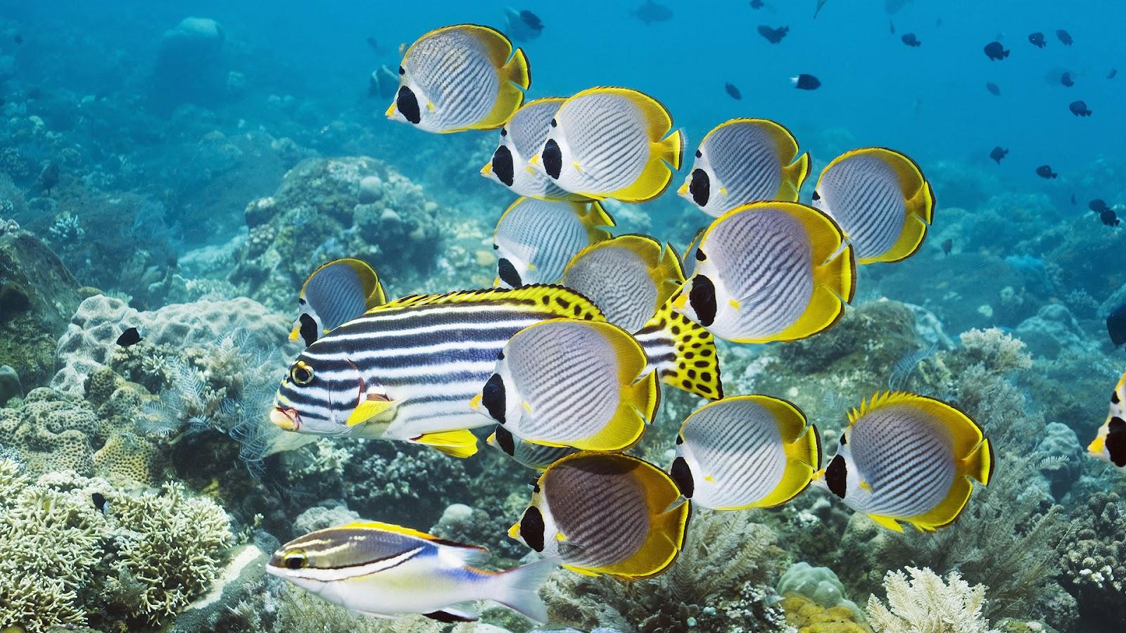 http://3.bp.blogspot.com/-j3SUrChOUQM/UC6LvDNEKlI/AAAAAAAAFPo/2xWxVcsTmKc/s1600/hd-vissen-wallpaper-met-onderwater-zwemmende-tropische-vissen-achtergrond-foto.jpg