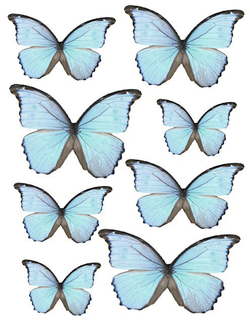 Butterfly clipart collage by csthruh2o