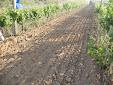 Gascón Internacional Discs Harrow for vineyard