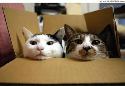 Cool Cats Hiding Seen On www.coolpicturegallery.us