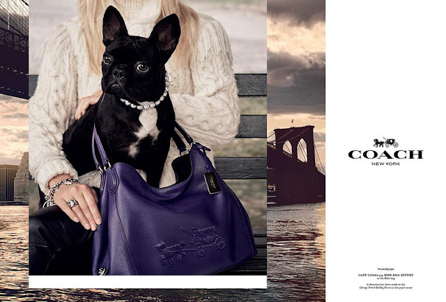 Lady Gaga's dog is Coach's Campaign star
