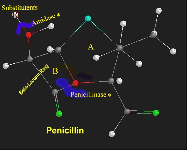 what comprises a penicillin structure essay Penicillins are a group of antibiotics used to treat a wide range of bacterial   peptidoglycans create a mesh-like structure around the plasma  as the water  concentration of the surrounding fluid is higher than that  please use one of the  following formats to cite this article in your essay, paper or report.
