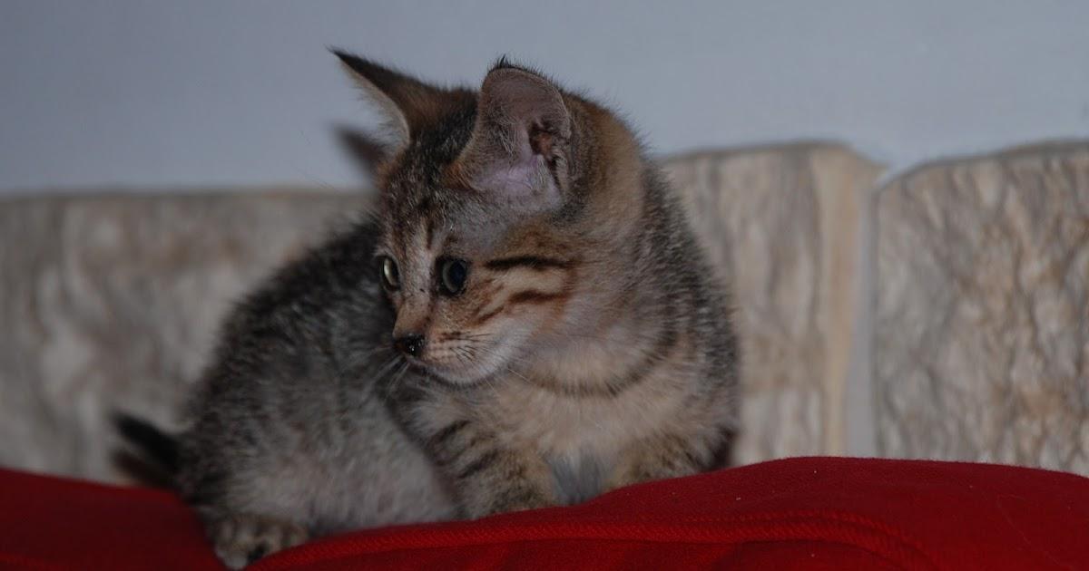 Passioncats adottati firenze tanti cuccioli al gattile di - Gattile bagno a ripoli firenze ...