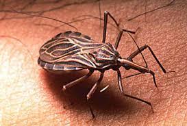 serangga pembawa penyakit berbahaya